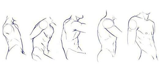 Как нарисовать тело человека. Торс и плечи
